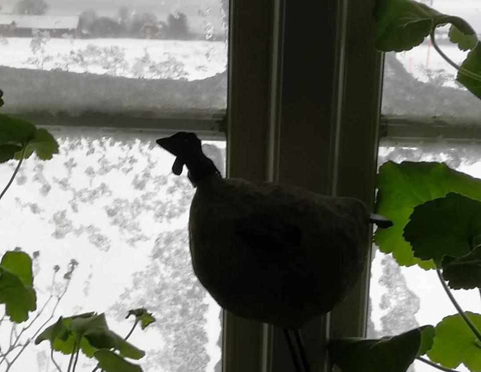 Stanna hemma i snöovädret